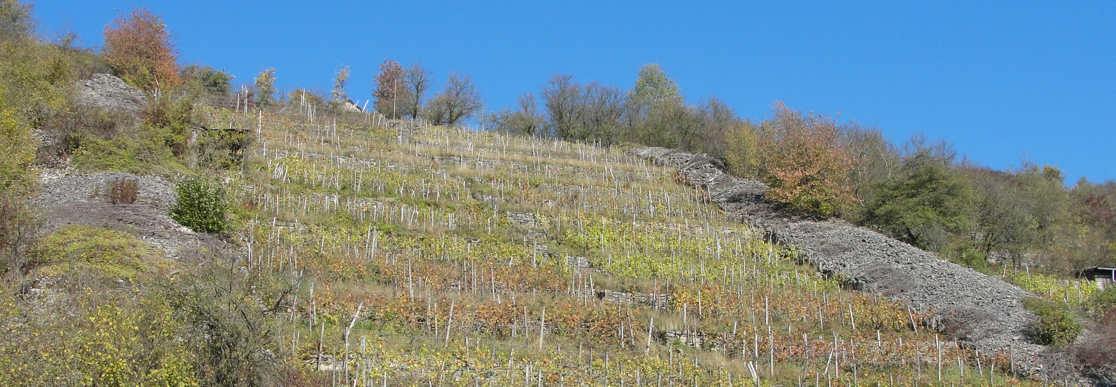 Das Naturerbe der Weinbaulandschaft im Unterland: 3.12. in Widdern