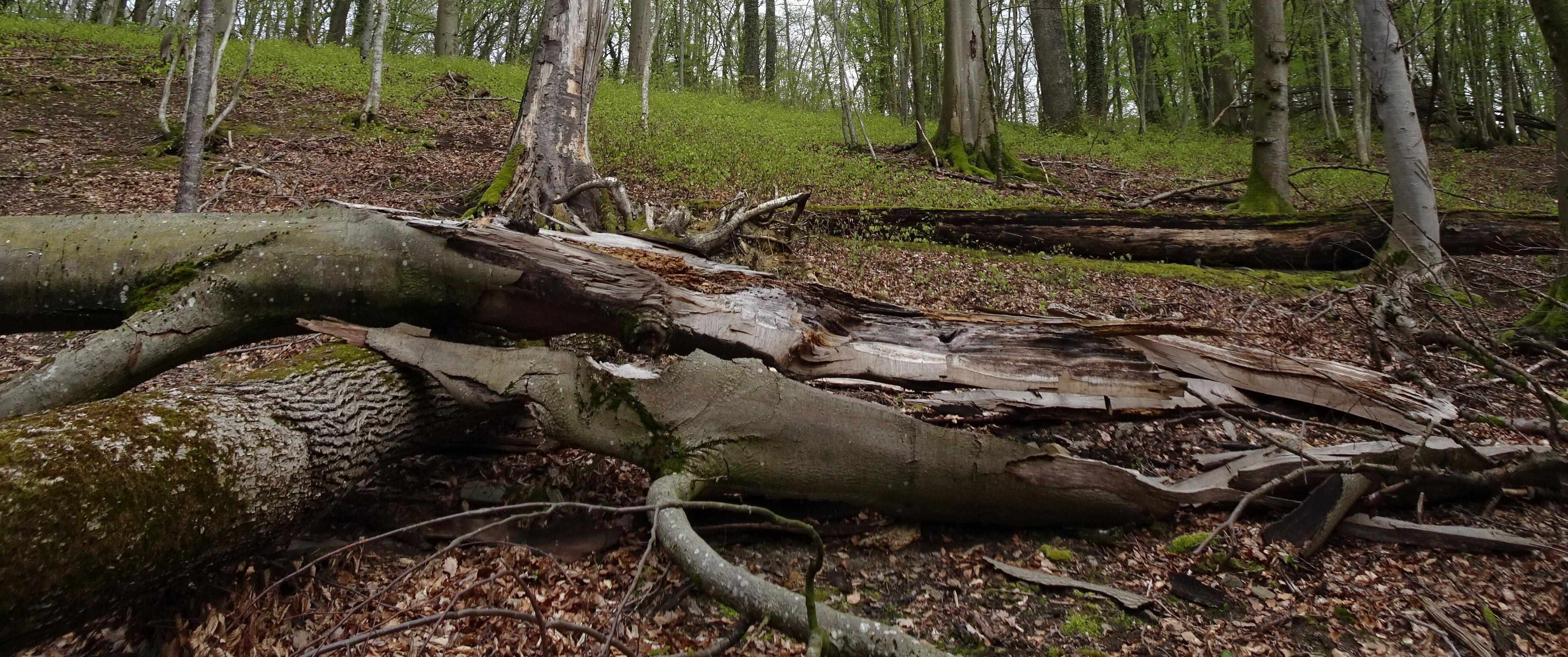 Natur- und heimatkundliche Vorträge z. B.: Urwald von morgen im Fünfmühlental am Mi. 27. Oktober
