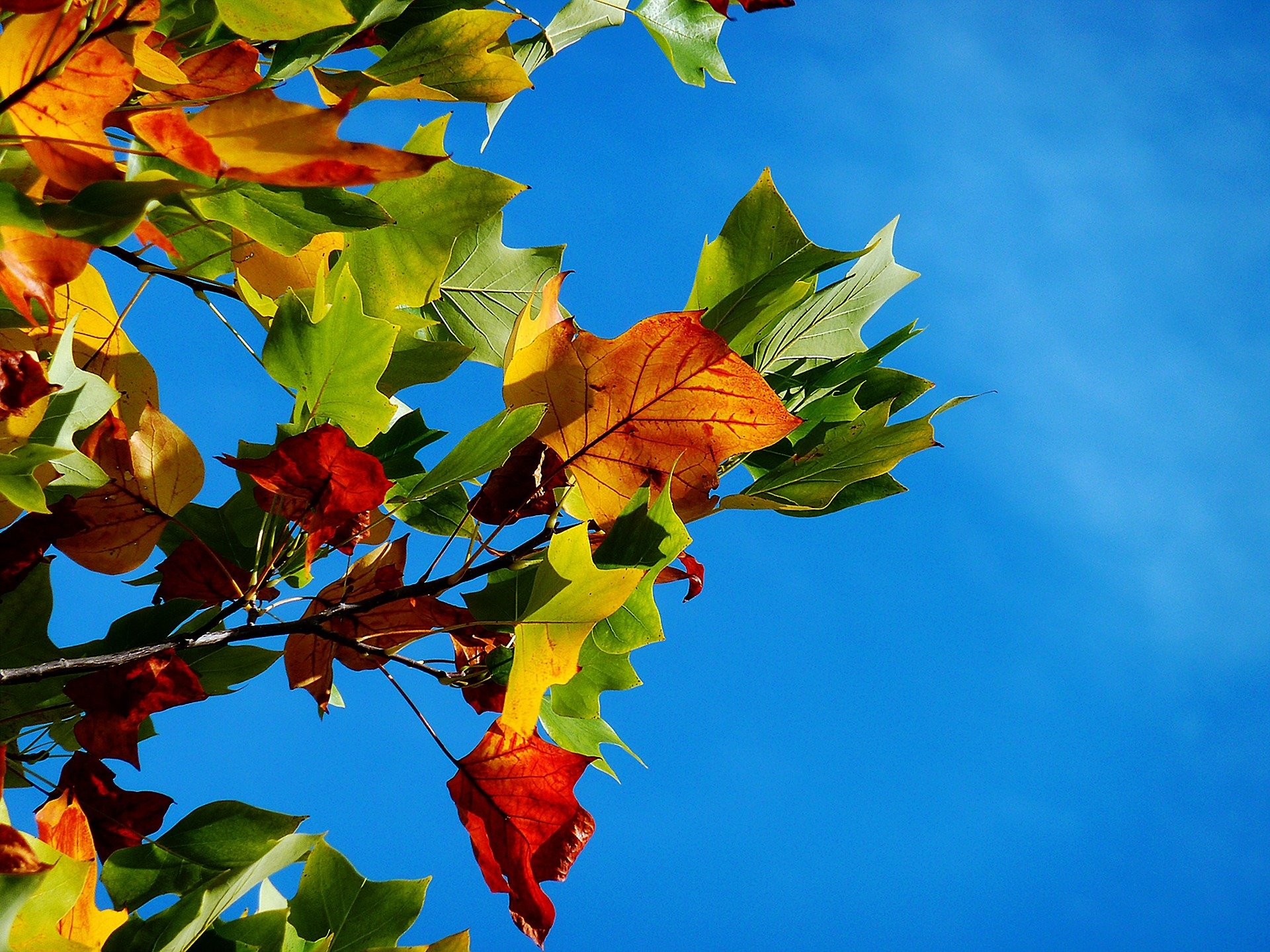 bunte Laubblätter im Herbst